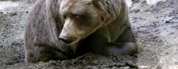 The Grizzly tries a mud hole, but fails